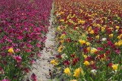 Natur för blommafältfärger Royaltyfri Bild