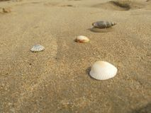 Natur för havskust arkivfoton