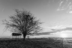 Natur för landskap för detalj för trädsvartgryning royaltyfria foton