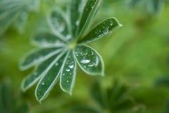 Natur führt Anlage mit Regentropfen einzeln auf Lizenzfreies Stockfoto
