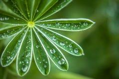 Natur führt Anlage mit Regentropfen einzeln auf Stockbild