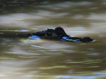 Natur flory i fauny Costa Rica zdjęcie royalty free