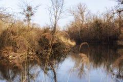 Natur fotografie od Szigetköz w Węgry fotografia royalty free