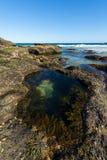 Natur från den härliga stranden i Sydney royaltyfria foton