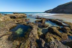 Natur från den härliga stranden i Sydney arkivfoton