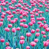 Natur-Frühling Blumen-Walpaper Lizenzfreies Stockbild
