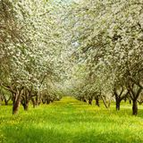 Natur-Frühlings-Landschaft mit blühendem Apple arbeiten im Garten Lizenzfreie Stockfotos