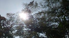 Natur gałąź i drzewa Fotografia Royalty Free