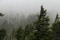 Natur: Gebirgswald im windigen Wetter Lizenzfreie Stockfotografie