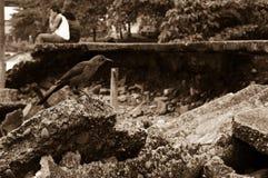 Natur geschossen vom Vogel Lizenzfreies Stockfoto