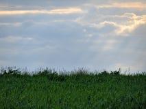 Natur, gräs, himmel, solsken och moln arkivbild