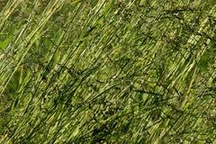 Natur gräsplan, makro, äng, bakgrund Arkivbild