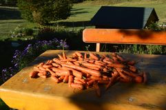 Natur grönsak, vildmark, tabell, woodhouse, mat Arkivfoton