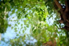 Natur Green Day Royaltyfria Bilder