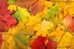 Natur - höstbladbakgrund Arkivfoton