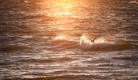 Natur Hav och solnedgång waves för textur för hav för illustrationsdesign naturliga Arkivbilder