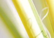 Natur-Hintergrund Lizenzfreies Stockfoto