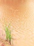 Natur-Hintergrund Stockfotos