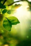 Natur-Hintergrund Stockbilder