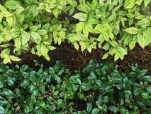 Natur-Hintergrund eines belaubten Grüns Stockfotografie