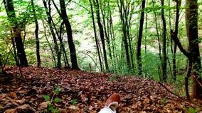 Natur-Holz Lizenzfreies Stockbild