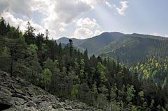Natur. Holz und Berge. Stockfotografie