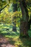 Natur Härliga höstfärger i slottträdgården Arkivbild