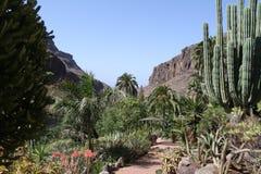 Natur i Fuerteventura Royaltyfria Bilder