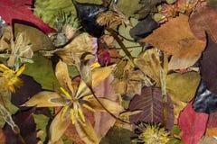 Natur i höst Fotografering för Bildbyråer