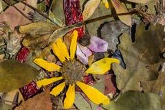 Natur i höst Royaltyfri Fotografi