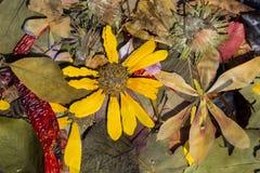 Natur i höst Arkivbild