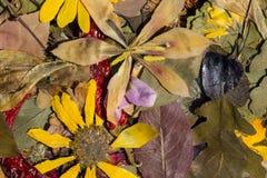 Natur i höst Royaltyfria Foton
