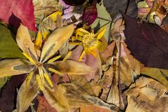 Natur i höst Royaltyfria Bilder