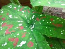 Natur i monsun royaltyfri bild