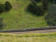 Natur i Nya Zeeland Arkivfoto