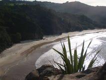 Natur i Nya Zeeland Fotografering för Bildbyråer