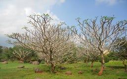 Natur i Puducherry, en tyst liten stad på den sydliga kusten av Indien Fotografering för Bildbyråer