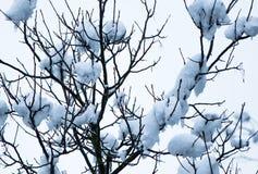 Natur i snöig vinter Fotografering för Bildbyråer