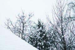 Natur i snöig vinter Royaltyfri Fotografi