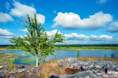 Natur i sommar Arkivbild