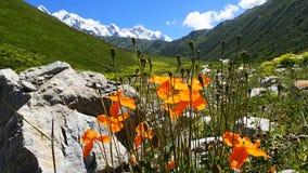 Natur i Svaneti Royaltyfri Bild