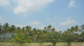 Natur i tamilen NaduPuducherry, en tyst liten stad på den sydliga kusten av Indien Fotografering för Bildbyråer