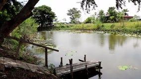 Natur i thailand lager videofilmer