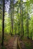Natur i Tustan Lviv region Arkivfoto