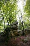Natur i Tustan Lviv region Royaltyfria Bilder