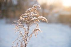Natur i vinter, snöig och frostigt royaltyfri foto