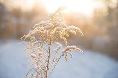 Natur i vinter, snöig och frostigt arkivfoto