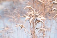 Natur i vinter, snöig och frostigt arkivbild