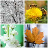 Natur i vinter, vår, sommar och höst. Collage. Arkivfoto