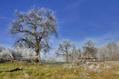 Natur i vintertiden Royaltyfri Bild